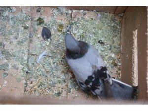 Balkona sığınan kanadı kırık güvercine şefkat eli