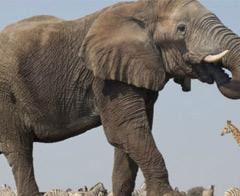 Filler için son 100 yıl!