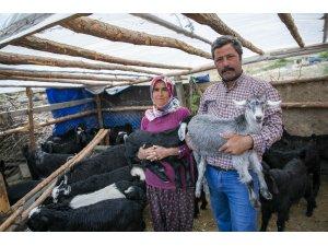 'Haydi Gel Köyümüze Destek Verelim' projesi yeni doğumlarla büyüyor
