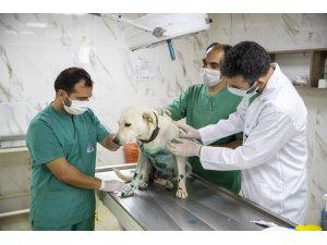 Elektrikli bisikletin arkasında sürüklenen köpek tedavi edildi