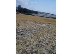 Sağanak yağış ve dolu ekili alanlara zarar verdi