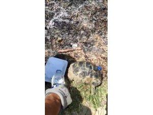 Alevlerin içinde kalan kaplumbağalara itfaiye erlerinden yardım eli