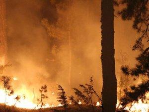 170 hektarlık ormanlık alan kül oldu