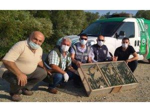 Operasyonda ele geçirilen 120 adet saka kuşu doğaya salındı