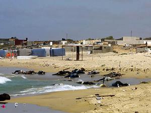 Libya'da onlarca ceset kıyıya vurdu