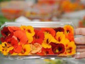 Bu çiçekler  midemizi süslüyor