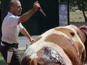 Hayvanı bıçaklayarak kesimhaneye götürdü