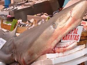 Adana'da dev köpekbalığı