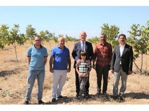 Tuşba Belediyesi'nin öncülük ettiği 'Model ceviz-badem' bahçelerinde ürün alınmaya başlandı