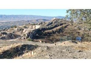 Elazığ'da yaban keçileri tarihi Harput Kalesine indi