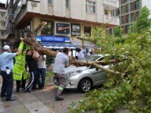 Adana'da şiddetli yağış ve fırtına ağaçları devirdi