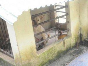 Öğretmen, öğrencisini köpekle aynı kafese kapattı