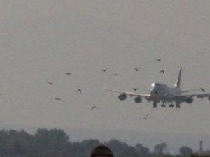 Atatürk Havalimanı'nda ölü kuş paniği