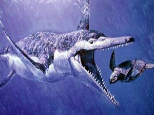 Gebze'de dinozor balığı bulundu