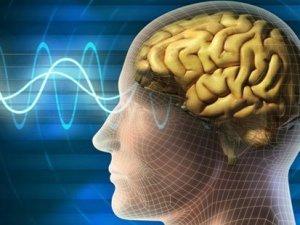 Zekada genlerin rolü nedir?