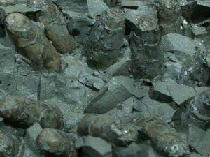 Dinozorları yok eden asteroitten kuşlar nasıl kurtuldu?