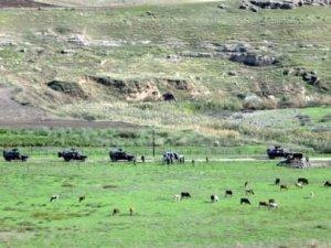 Sınırda askerleri hareketlilik