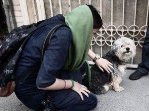 İran'da köpek besleyenlere kırbaç!