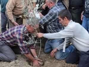 Zeytin ağaçları kesilen köylüler: Çocuklarımızı okutmak için hırsızlık mı yapalım?
