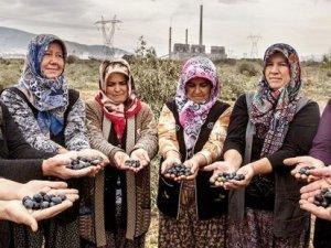 Yırca sakinleri zeytin ağaçları için hazırlanıyor