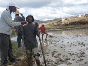 Madagaskar'da veba tehlikesi