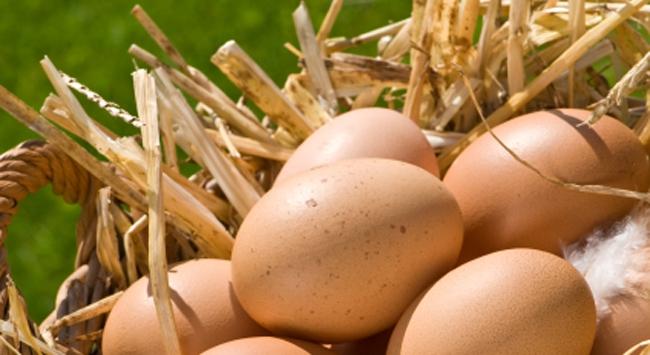 Yumurta üretiminde dev artış!