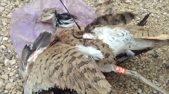 Taliban'dan 'kuş bombası'