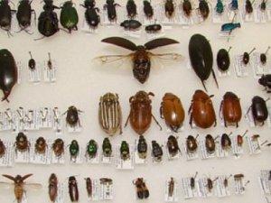 3 yeni böcek türü keşfedildi