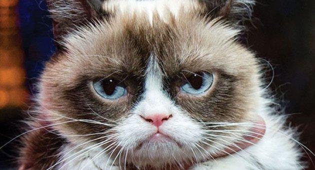 Grumpy Cat sahibine milyonlar kazandırdı
