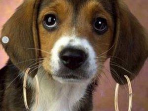 Evcil hayvanlara özel bakım yasak!