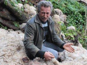 1 koyunun peşine sürü takıldı, 56 koyun telef oldu