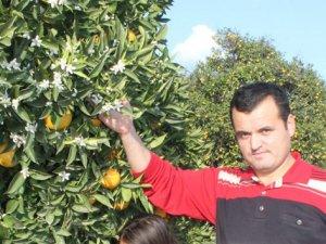 Portakal ağaçları çiçek açtı