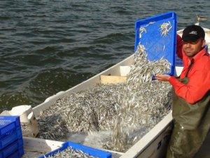 Anadolu'da balık üretimi arttı