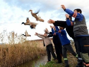 Antalya'da 10 çift yaban ördeği doğaya bırakıldı