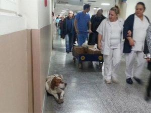 Soğuktan hastaneye sığındı