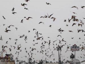 Martıların yağmurlu havada görsel şöleni