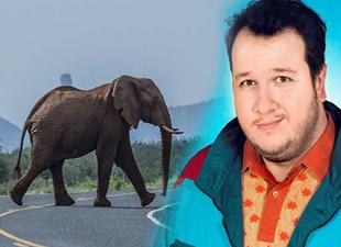 Şahan Gökbakar'ın fili