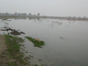 Uluabat Gölü çevresinde su baskını