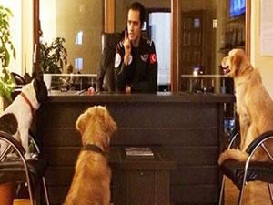 Maltepe Belediyesi, üç köpeği işe aldı