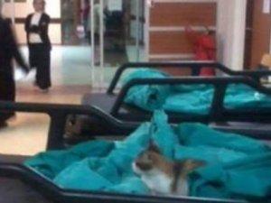 Çapa'daki İstanbul Üniversitesi'nde 8. kata çıkan kedi şaşkınlık yaratıyor