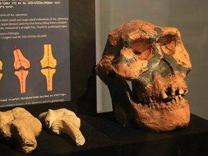 En eski insan fosili olan Lucy ziyaretçilerin ilgi odağı