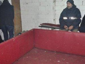 Manisa'da horoz dövüşü operasyonu