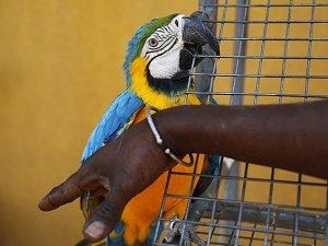 Senegal'de egzotik kuşlar korunuyor