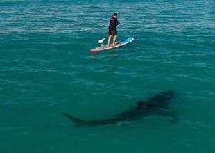 Avustralya'da sörf yapan kişiye köpek balığı saldırdı
