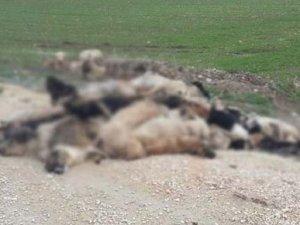 Bunun adı vicdansızlık! 84 sokak köpeği zehirlenerek öldürüldü