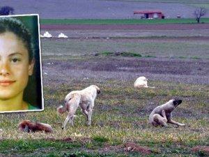 Köpekler kadını parçaladı