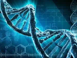 Tartışmalı genetik çalışması