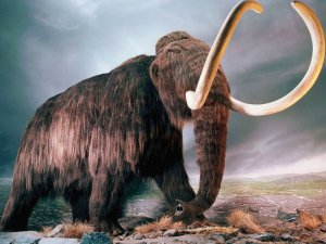 Bilim İnsanları 4 bin yıl önce soyları tükenen mamutları klonlayacaklar