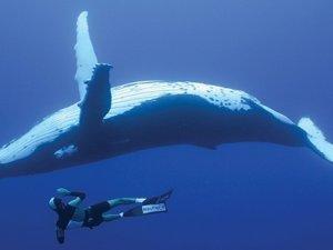 İnsanoğlu balinaları yok etti