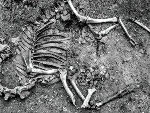 Osmanlı'dan kalma deve iskeleti bulundu